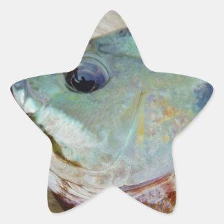 blue yellow purple teal, Bluegill fish on dock Star Sticker