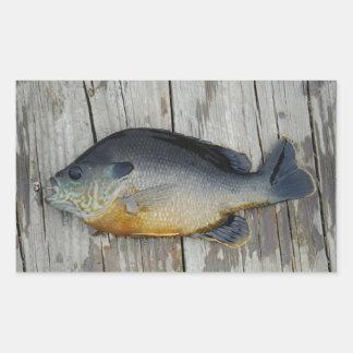 blue yellow purple teal, Bluegill fish on dock Rectangle Sticker