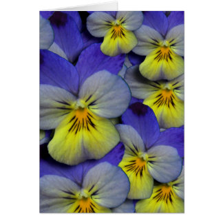 Blue & Yellow Wild Pansy Thank You Card