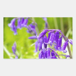 Bluebell 1.jpg rectangular sticker