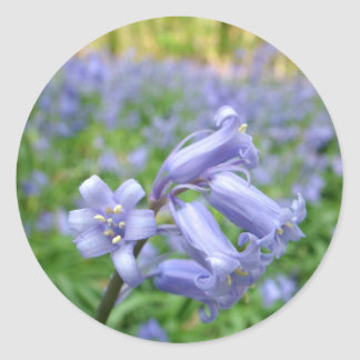 Bluebell Classic Round Sticker