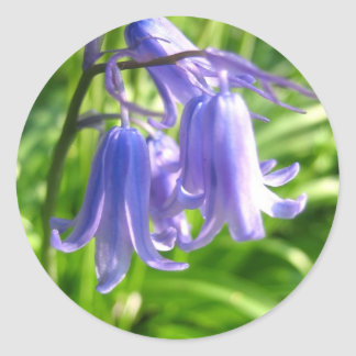 Bluebell flowers - Sticker
