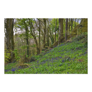 Bluebell Hill Photo Print
