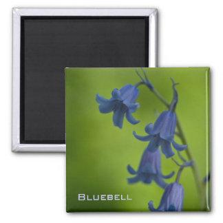 Bluebell Magnet