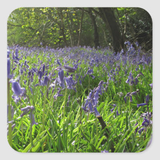 Bluebell Meadow Square Sticker
