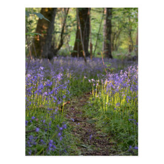 Bluebell Path Postcard