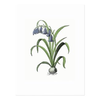 Bluebell Postcard