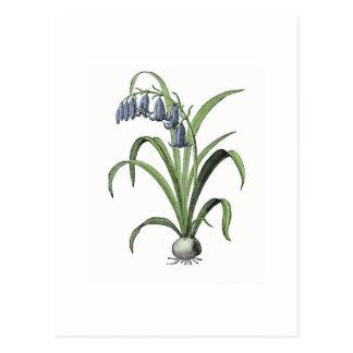 Bluebell Postcard