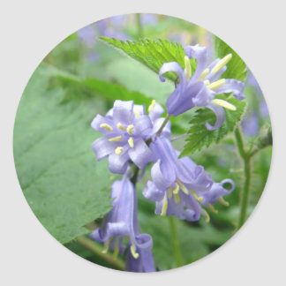 Bluebell - Trottiscliffe Country Park Classic Round Sticker