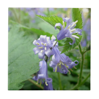 Bluebell - Trottiscliffe Country Park Tile