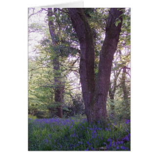 Bluebell Walk Card
