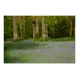 BLUEBELL WOOD 2 POSTER