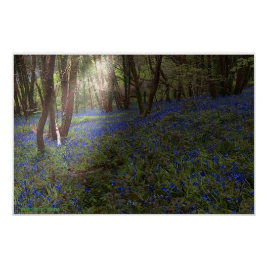 Bluebell Wood England Sunbeam Breaking Through Poster