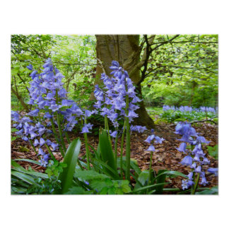 BLUEBELL WOOD ~ Poster # 2