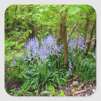 BLUEBELL WOOD ~ Square Envelope Sealer/Sticker Square Sticker