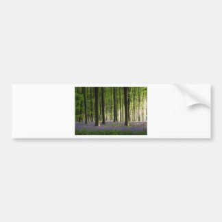 Bluebell Woodland Bumper Sticker
