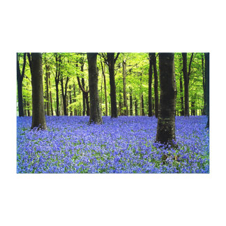 Bluebell Woods-Dorset Canvas Print