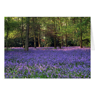 Bluebell Woods, England Card
