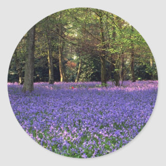 Bluebell Woods, England Classic Round Sticker