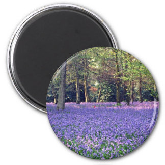 Bluebell Woods, England  flowers 6 Cm Round Magnet