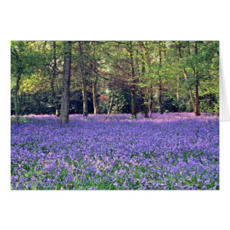 Bluebell Woods, England  flowers Card