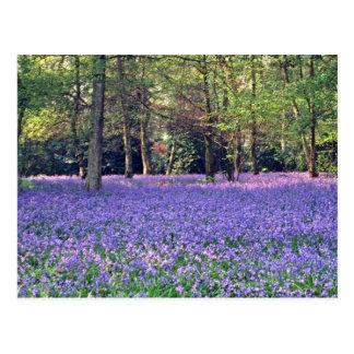 Bluebell Woods, England  flowers Postcard