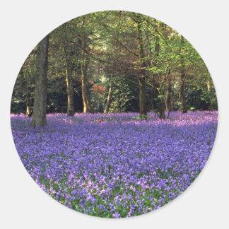 Bluebell Woods, England Round Sticker