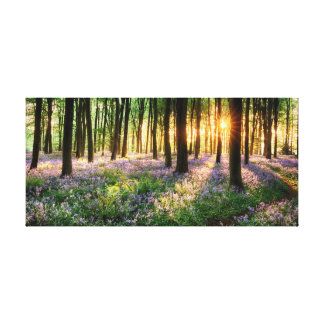 Bluebell woods in early morning sunrise canvas print
