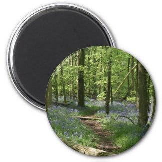 Bluebell woods magnet