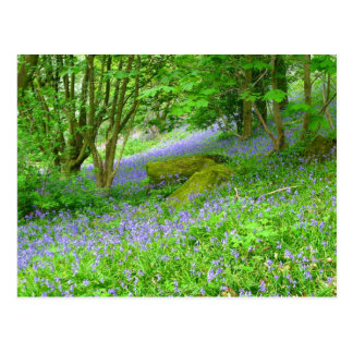 Bluebell Woods Postcard