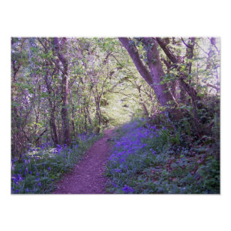 Bluebell Woods Print