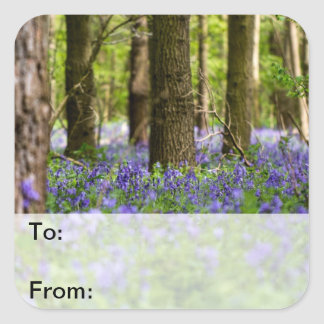 Bluebell Woods Square Sticker