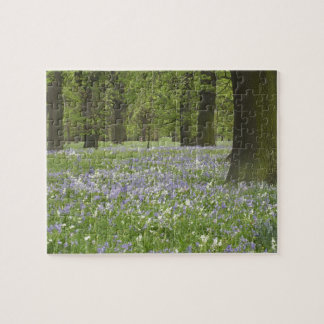 Bluebells and Oak Trees in Spring, Little Hagley Jigsaw Puzzle