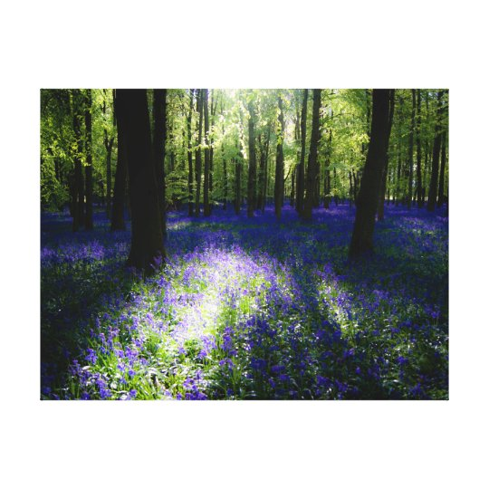 Bluebells at dusk, Dockey Wood, Ashridge Canvas Print