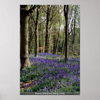 Bluebells, Blicking Park, Blicking, Norfolk Poster