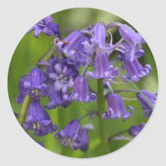 bluebells classic round sticker