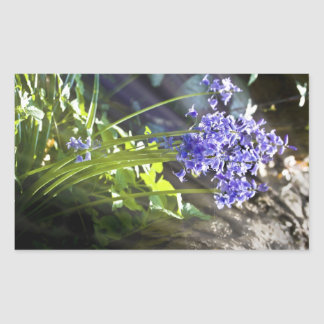 Bluebells close up with sunlight streaming through rectangular sticker