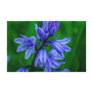 Bluebells Closeup Canvas Print