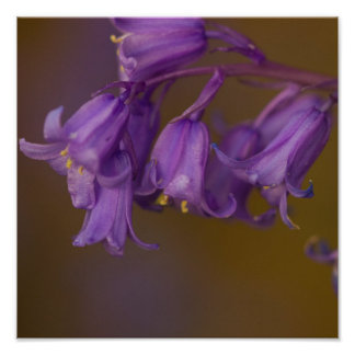 Bluebells design cards and paper products poster