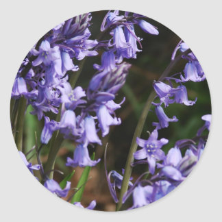 Bluebells Flowers Nature Floral Blue Purple Flower Classic Round Sticker