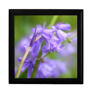 Bluebells gift box