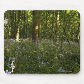 Bluebells In A Forest Mouse Mat