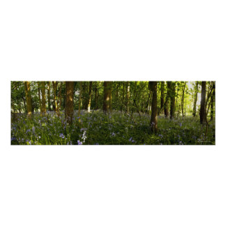 Bluebells In A Forest Print