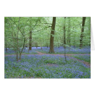 Bluebells in a Wood Card