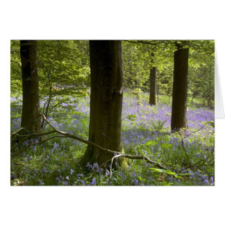 Bluebells in Clapdale Wood, The Yorkshire Dales Greeting Card