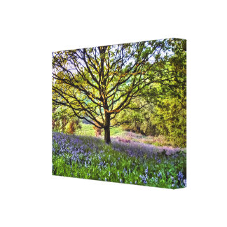 Bluebells in the meadow canvas print.