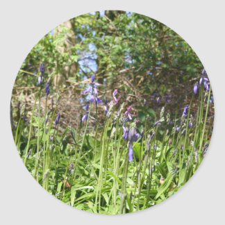 Bluebells in the Wood Stickers