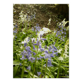Bluebells in Woodland poster 2