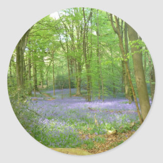 Bluebells in Woods Round Sticker