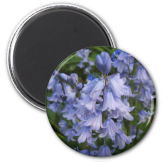 Bluebells Magnet